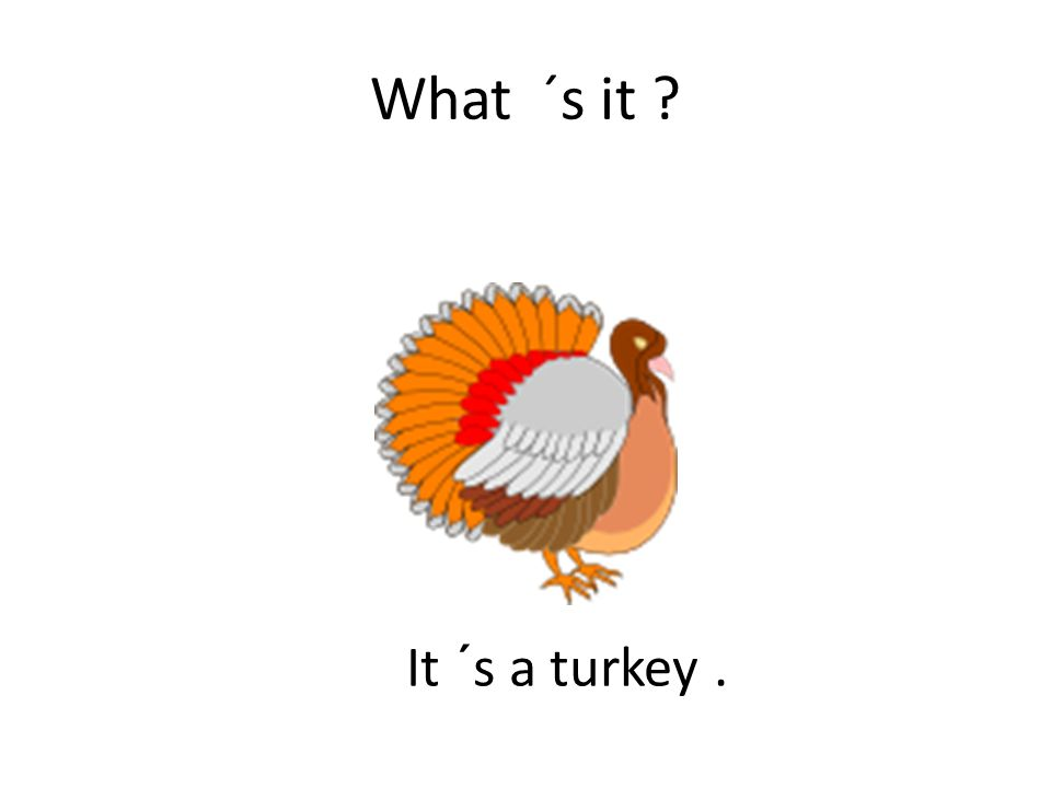 What ´s it ? It ´s a turkey.