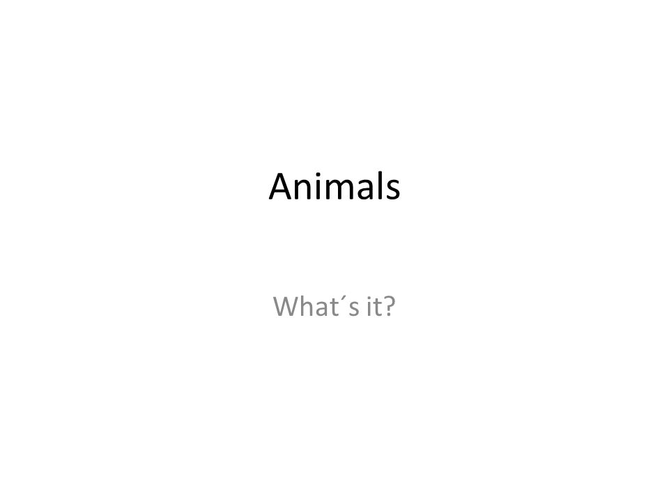 Animals What´s it