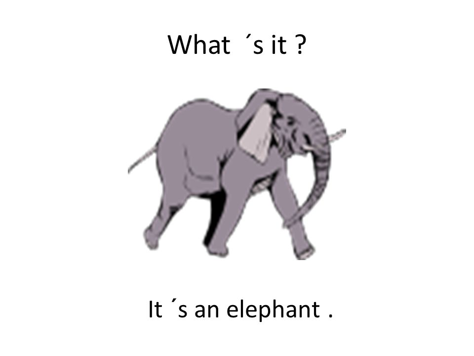What ´s it It ´s an elephant.