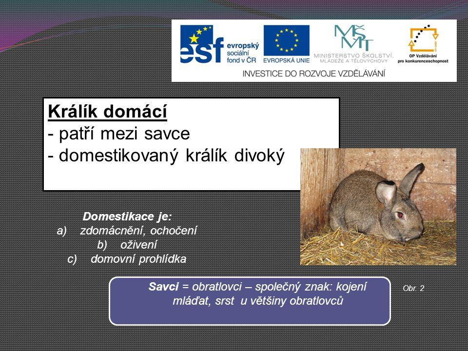 Králík domácí - patří mezi savce - domestikovaný králík divoký Domestikace je: a)zdomácnění, ochočení b)oživení c)domovní prohlídka Savci = obratlovci