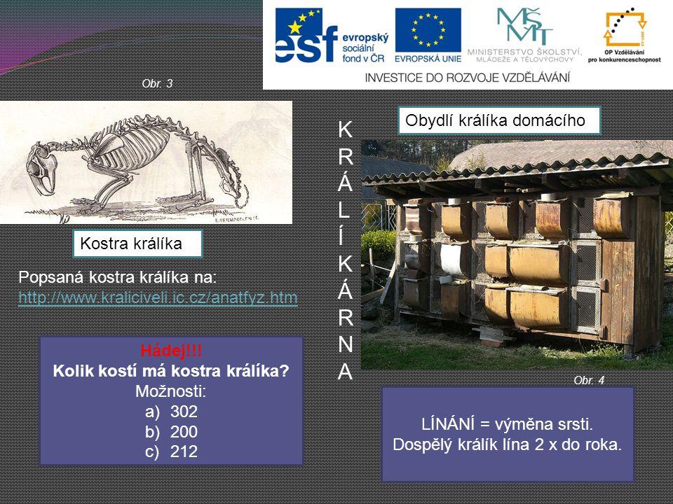 Další zdroje: www.wikipedia.org http://www.kraliciveli.ic.cz/nemoci.htm http://www.zviratkodoma.cz/kralik/rozmnozovani- kraliku http://www.youtube.com/watch?v=qg3FdQ0BNCo http://www.kraliciveli.ic.cz/anatfyz.htm