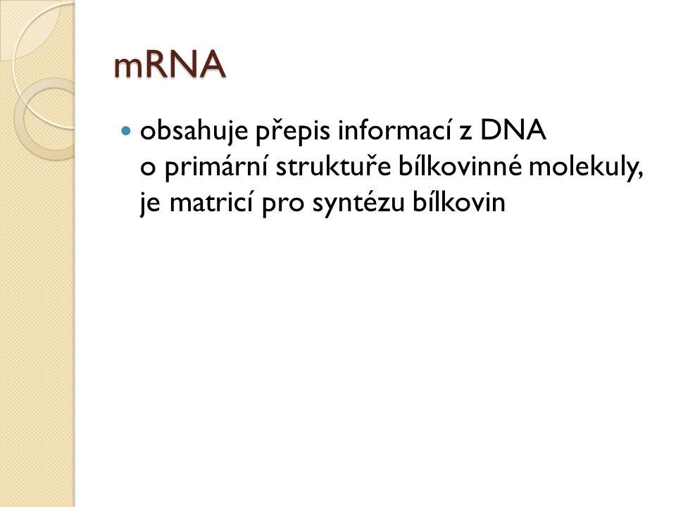 rRNA je součástí ribozómů, v nichž probíhá proteosyntéza