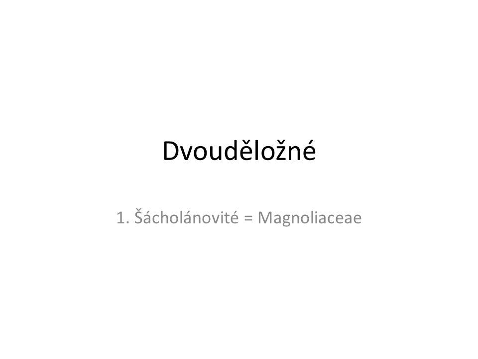 Dvouděložné 1. Šácholánovité = Magnoliaceae