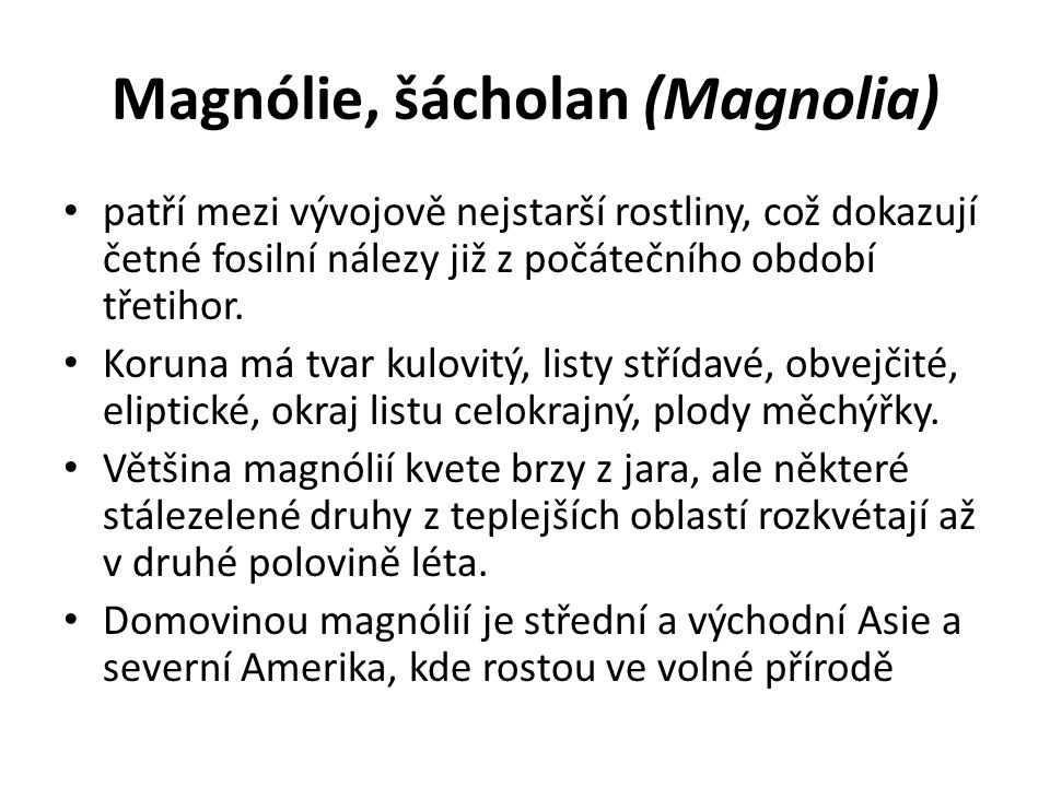 Magnólie, šácholan (Magnolia) patří mezi vývojově nejstarší rostliny, což dokazují četné fosilní nálezy již z počátečního období třetihor. Koruna má t