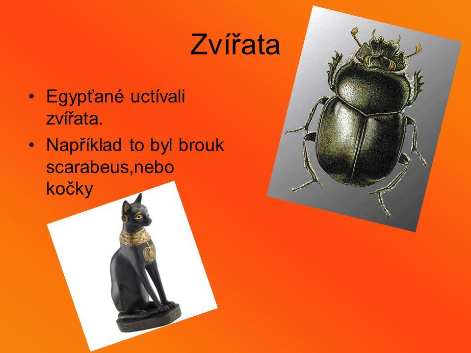 Zvířata Egypťané uctívali zvířata. Například to byl brouk scarabeus,nebo kočky