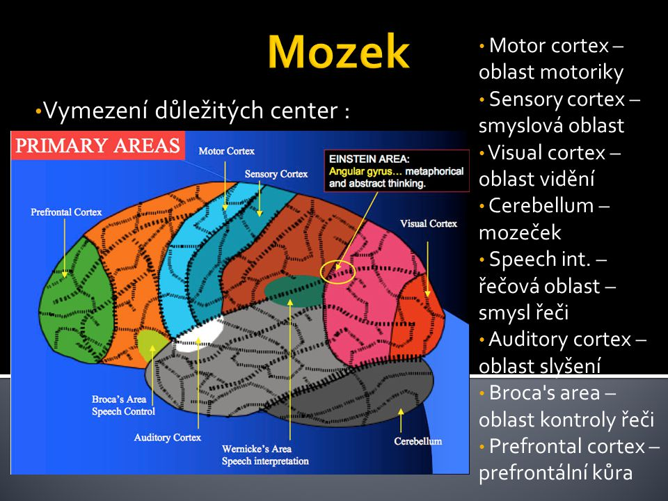 Vymezení důležitých center : Motor cortex – oblast motoriky Sensory cortex – smyslová oblast Visual cortex – oblast vidění Cerebellum – mozeček Speech
