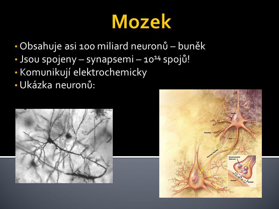 Obsahuje asi 100 miliard neuronů – buněk Jsou spojeny – synapsemi – 10 14 spojů! Komunikují elektrochemicky Ukázka neuronů: