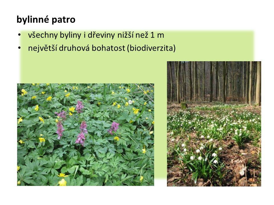 bylinné patro všechny byliny i dřeviny nižší než 1 m největší druhová bohatost (biodiverzita)