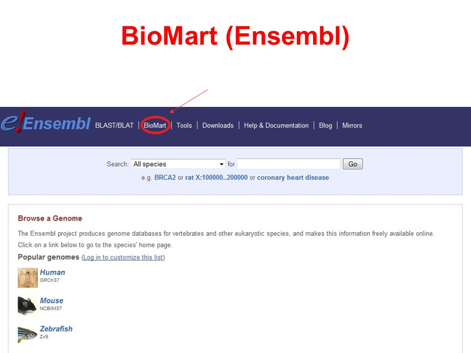 BioMart (Ensembl)