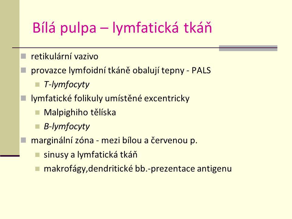 Bílá pulpa – lymfatická tkáň retikulární vazivo provazce lymfoidní tkáně obalují tepny - PALS T-lymfocyty lymfatické folikuly umístěné excentricky Malpighiho tělíska B-lymfocyty marginální zóna - mezi bílou a červenou p.