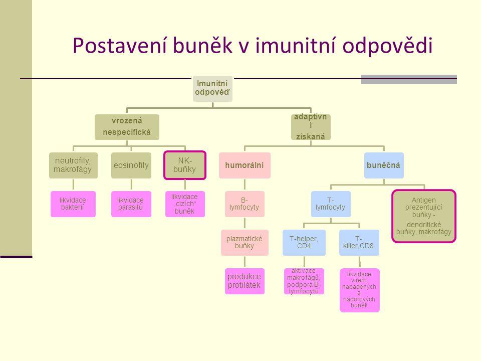 """Postavení buněk v imunitní odpovědi Imunitní odpověď vrozená nespecifická neutrofily, makrofágy likvidace bakterií eosinofily likvidace parasitů NK- buňky likvidace """"cizích buněk adaptivn í získaná humorální B- lymfocyty plazmatické buňky produkce protilátek buněčná T- lymfocyty T-helper, CD4 aktivace makrofágů, podpora B- lymfocytů T- killer,CD8 likvidace virem napadených a nádorových buněk Antigen prezentující buňky - dendritické buňky, makrofágy"""