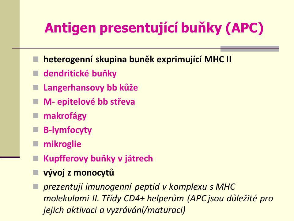 Antigen presentující buňky (APC) heterogenní skupina buněk exprimující MHC II dendritické buňky Langerhansovy bb kůže M- epitelové bb střeva makrofágy B-lymfocyty mikroglie Kupfferovy buňky v játrech vývoj z monocytů prezentují imunogenní peptid v komplexu s MHC molekulami II.