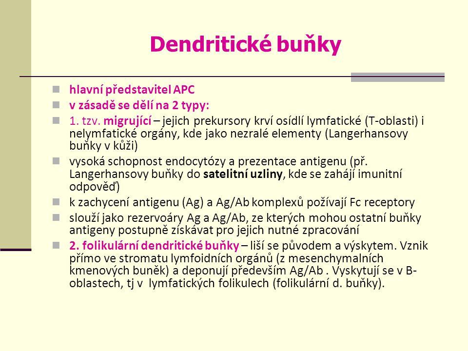 Dendritické buňky hlavní představitel APC v zásadě se dělí na 2 typy: 1.