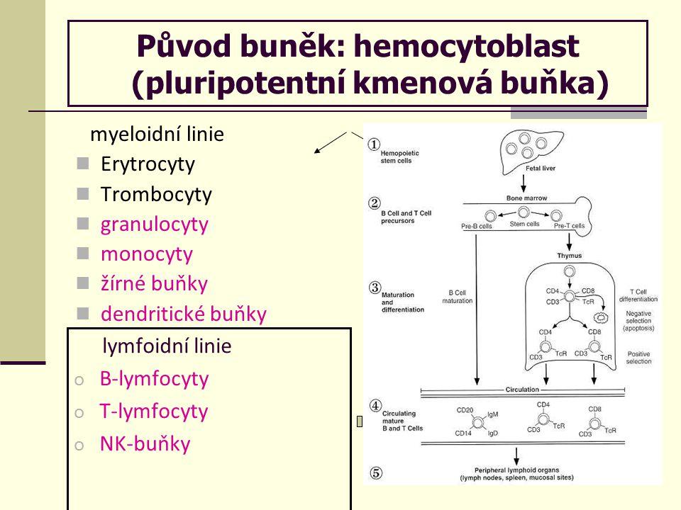 Původ buněk: hemocytoblast (pluripotentní kmenová buňka) myeloidní linie Erytrocyty Trombocyty granulocyty monocyty žírné buňky dendritické buňky lymfoidní linie o B-lymfocyty o T-lymfocyty o NK-buňky