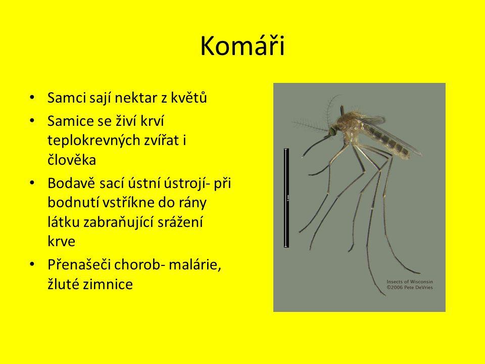 Komáři Samci sají nektar z květů Samice se živí krví teplokrevných zvířat i člověka Bodavě sací ústní ústrojí- při bodnutí vstříkne do rány látku zabraňující srážení krve Přenašeči chorob- malárie, žluté zimnice