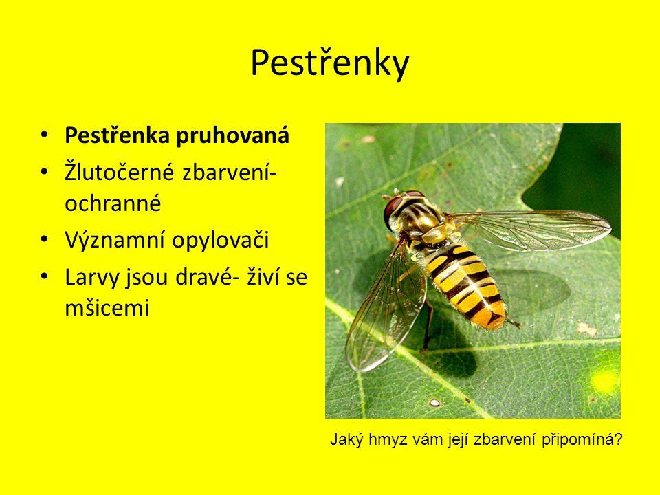 Pestřenky Pestřenka pruhovaná Žlutočerné zbarvení- ochranné Významní opylovači Larvy jsou dravé- živí se mšicemi Jaký hmyz vám její zbarvení připomíná