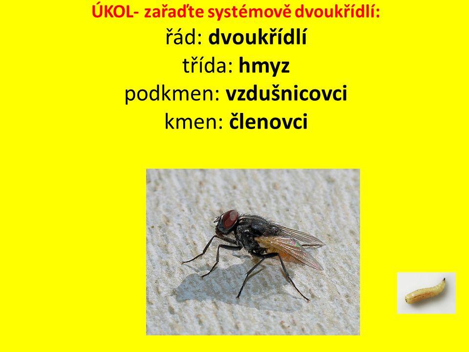 Vrtule třešňová Na křídlech 4 výrazné pruhy Škůdci třešní- způsobují červivost Vývoj: dospělec klade jedno vajíčko do třešně, z něho se vyvine larva, třešeň spadne na zem, larva zaleze do země a tam se zakuklí, přečkají zimu a v květnu se vylíhne dospělec