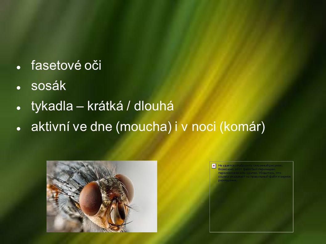 Rozmnožování proměna dokonalá vajíčka → půda, rostliny, vodní hladina, tělo vodní larvy – tykadla