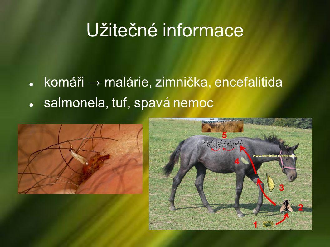 Užitečné informace komáři → malárie, zimnička, encefalitida salmonela, tuf, spavá nemoc