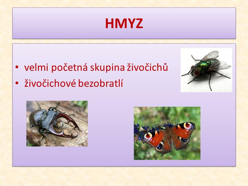 HMYZ velmi početná skupina živočichů živočichové bezobratlí velmi početná skupina živočichů živočichové bezobratlí