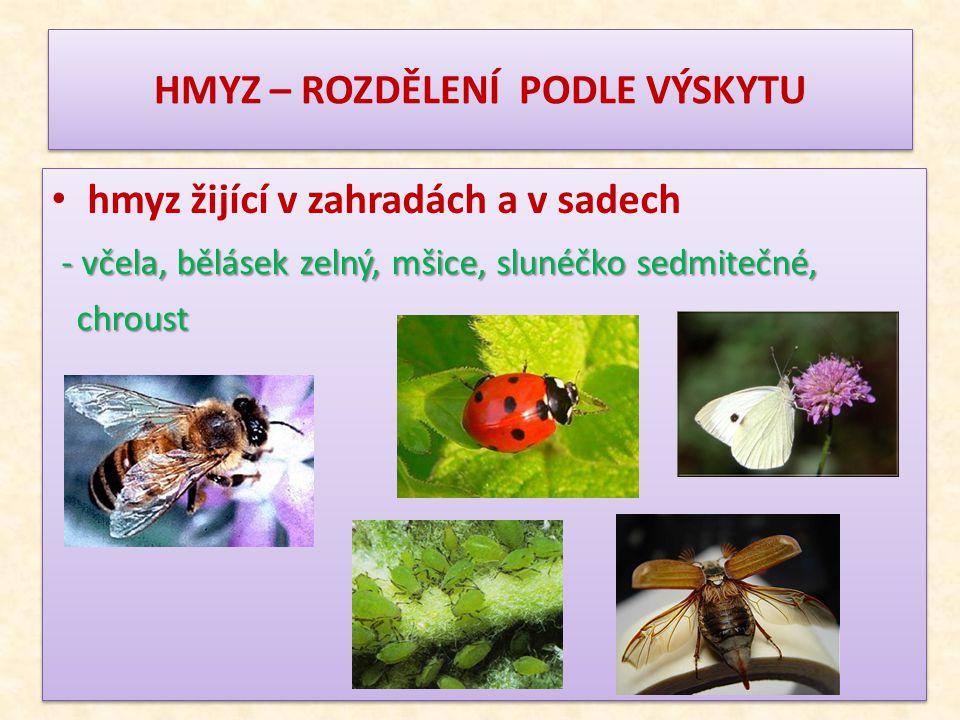HMYZ – ROZDĚLENÍ PODLE VÝSKYTU hmyz žijící v zahradách a v sadech - včela, bělásek zelný, mšice, slunéčko sedmitečné, chroust chroust hmyz žijící v za