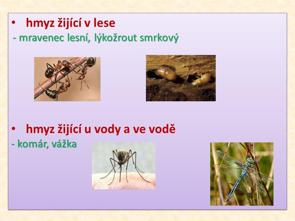 hmyz žijící v lese - mravenec lesní, lýkožrout smrkový - mravenec lesní, lýkožrout smrkový hmyz žijící u vody a ve vodě - komár, vážka hmyz žijící v l