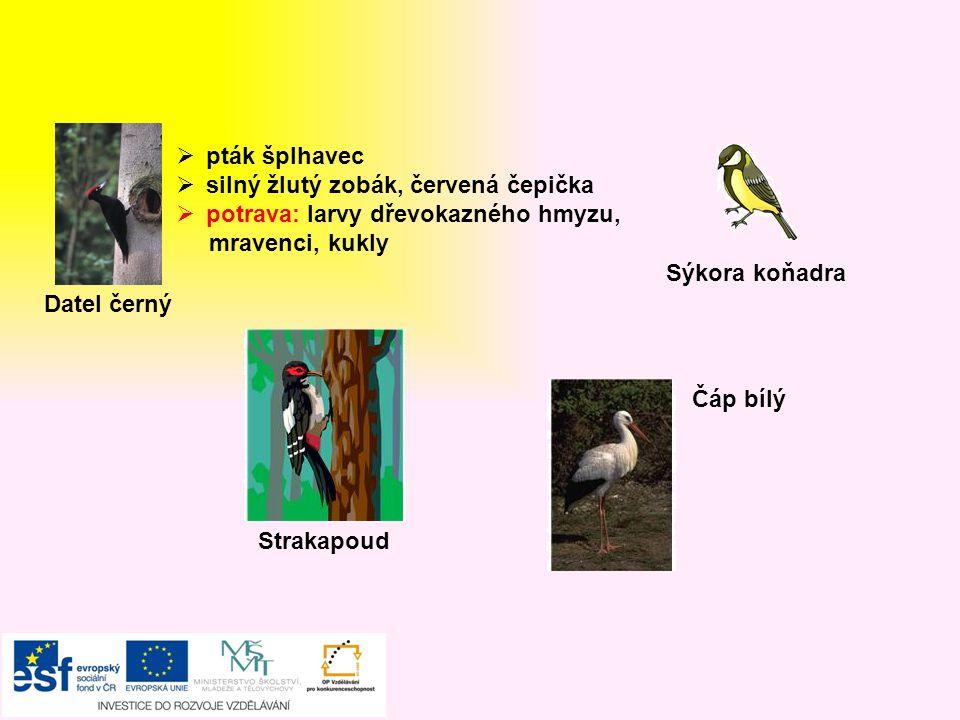 """Vlaštovka obecná  """"fráček , ocasní pera – vidlice  hmyz loví v letu  černá, červené hrdlo, bílé bříško  hnízdo miskovité  rychlý, obratný vytrvalý letec  odlétá do teplých krajin jiřička obecná  Podobná vlaštovce – méně vykrojený ocásek  hnízda krytá, s kruhovým otvorem Špaček obecný  Všežravec  Potrava: hmyz, housenky, můry, pavouky, plody Kukačka obecná  kuká samec  vajíčka klade do cizích hnízd  odlétají na jih  potrava: chlupaté housenky - užitečná"""