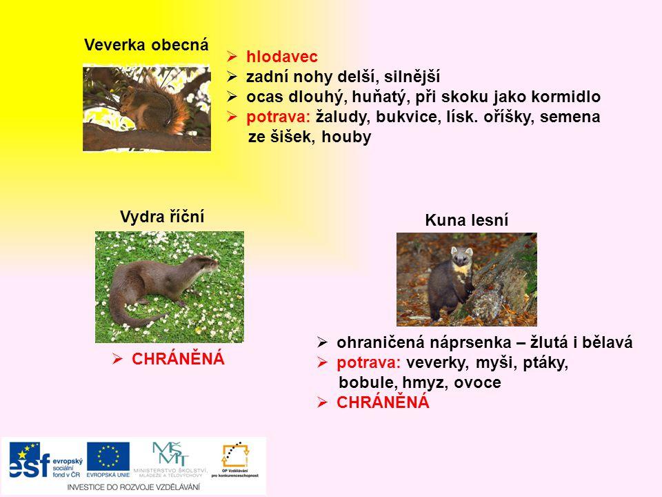 Prase divoké  všežravec, jemný čich  potrava: lesní plody, kořínky, brambory larvy, kukly hmyzu, myši, vajíčka ptáků  lovná zvěř  býložravec  je menší jak jelen  parůžky jen samci, každou zimu shazují  potrava: tráva, větvičky, pupeny, lesní plody  lovná zvěř  mláďat se nesmíme dotýkat Srnec obecný  šelma psovitá, samotářská  potrava: myši, žáby, ptáci, brouci, hraboši, zajíci, hmyz  POZOR.