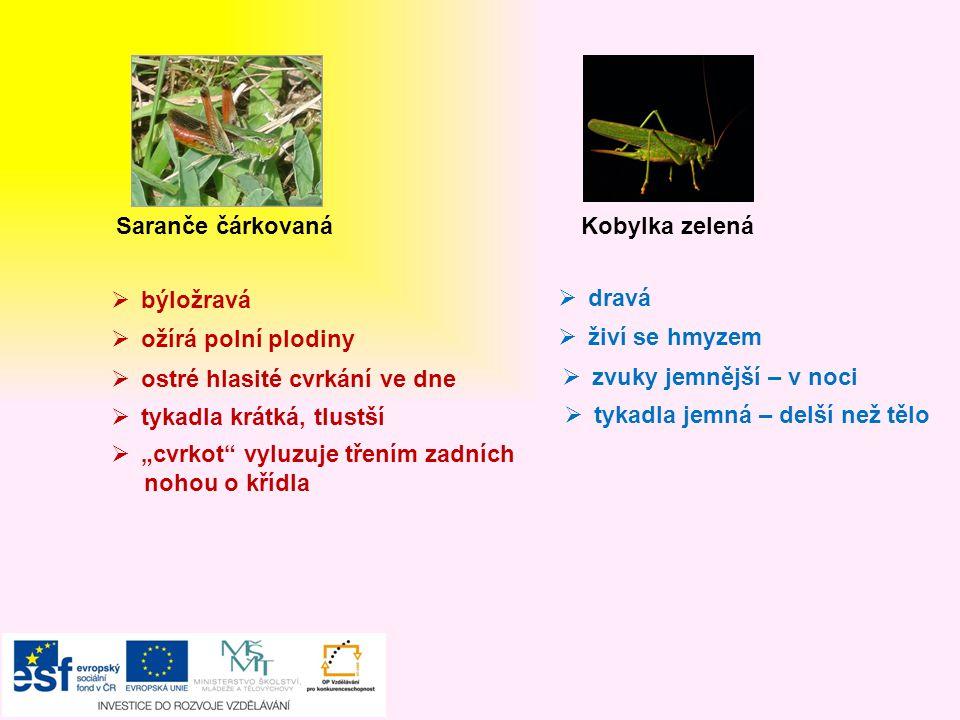 Mšice Slunéčko sedmitečné  dravý brouk = užitečný  ochrana proti nepřátelům – žlutá, hořká, páchnoucí tekutina  žlutá vajíčka – larvy – kukla – nové slunéčko  živí se mšicemi Lýkožrout smrkový  škůdce – larvy vyžírají lýko  napadá stromy oslabené, nemocné nebo poškozené Mravenec lesní  dravý  významný – okolí mraveniště vyčistí od škůdců