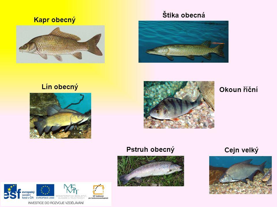 Ahoj, Čtvrtou skupinou budou RYBY Ahoj, V našich vodách jsou jaké ryby? SLADKOVODNÍ