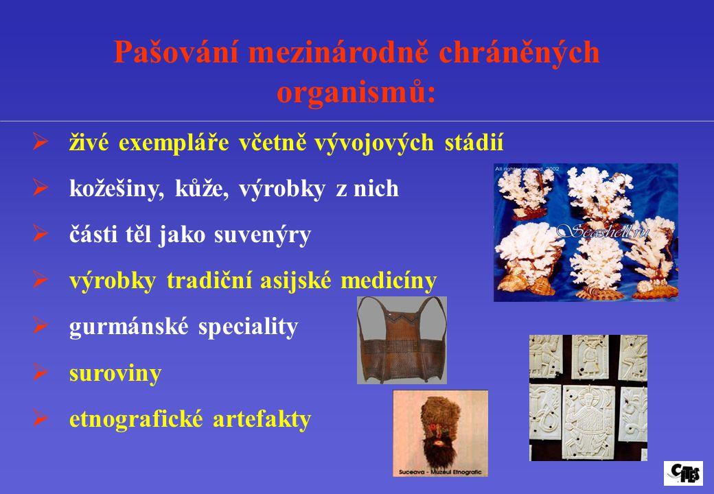 Pašování mezinárodně chráněných organismů:  živé exempláře včetně vývojových stádií  kožešiny, kůže, výrobky z nich  části těl jako suvenýry  výro