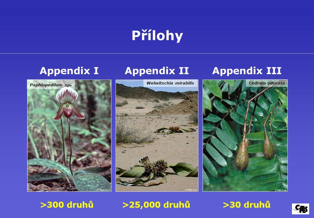Přílohy Appendix I >300 druhů Appendix II >25,000 druhů Appendix III >30 druhů Paphiopedilum sp. Welwitschia mirabilisCedrela odorata