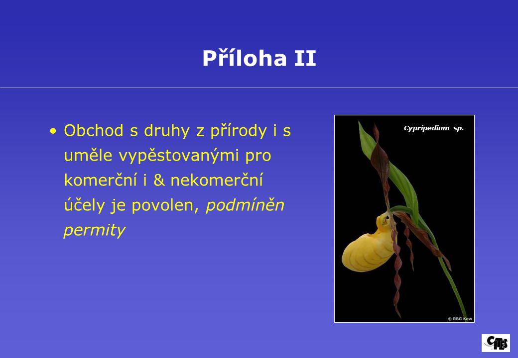 Obchod s druhy z přírody i s uměle vypěstovanými pro komerční i & nekomerční účely je povolen, podmíněn permity Příloha II Cypripedium sp.