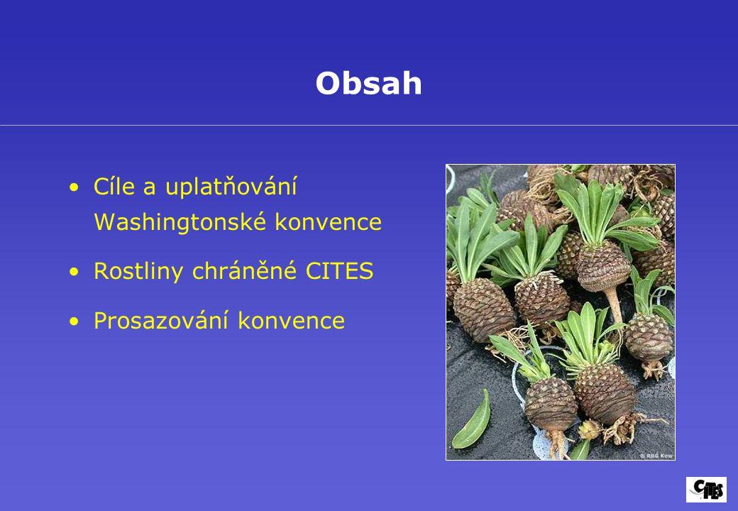 Cykasy CITES II některé druhy CITES I Dioon edule Mexiko Cycas panzhiuaensis Čína Sběr semen a velkých rostlin ohrožuje přírodní populace