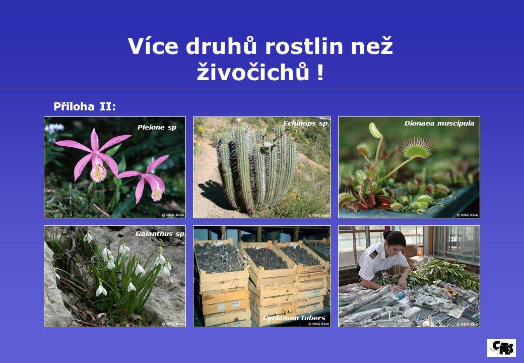 Více druhů rostlin než živočichů ! Pleione sp. Echinops sp.Dionaea muscipula Galanthus sp. Cyclamen tubers Příloha II: