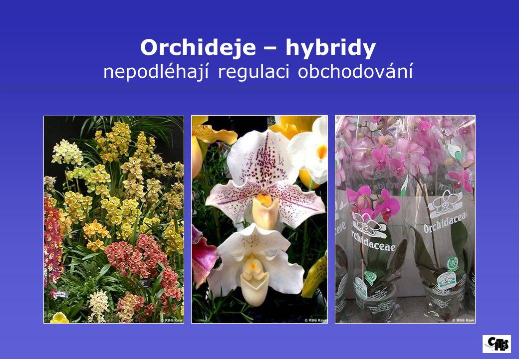 Orchideje – hybridy nepodléhají regulaci obchodování