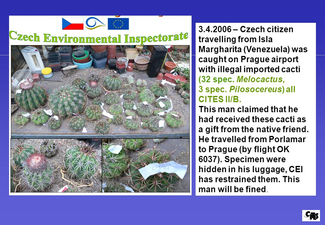 3.4.2006 – Czech citizen travelling from Isla Margharita (Venezuela) was caught on Prague airport with illegal imported cacti (32 spec. Melocactus, 3