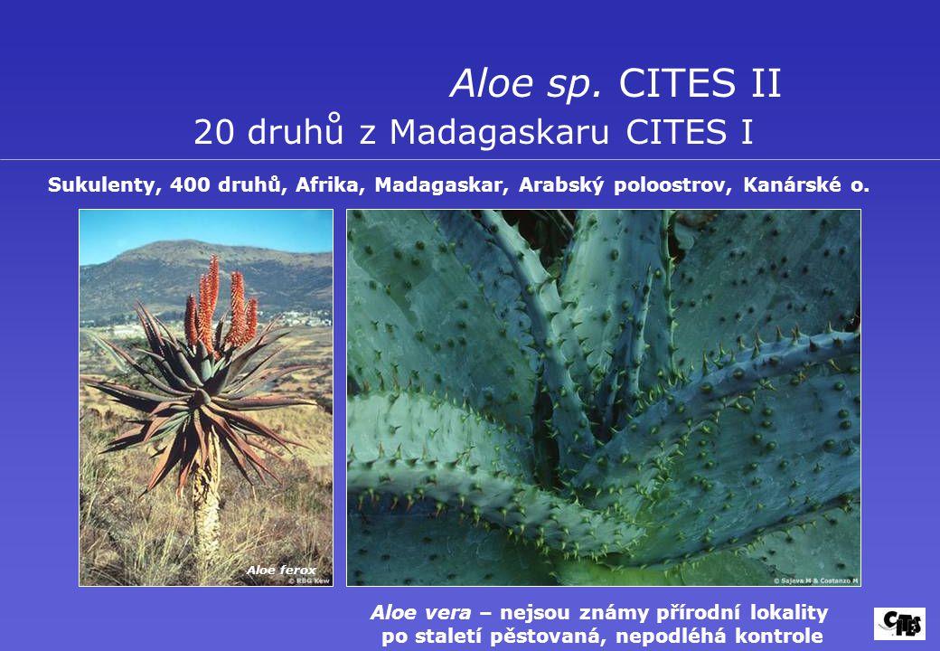 Aloe sp. CITES II 20 druhů z Madagaskaru CITES I Sukulenty, 400 druhů, Afrika, Madagaskar, Arabský poloostrov, Kanárské o. Aloe ferox Aloe vera – nejs