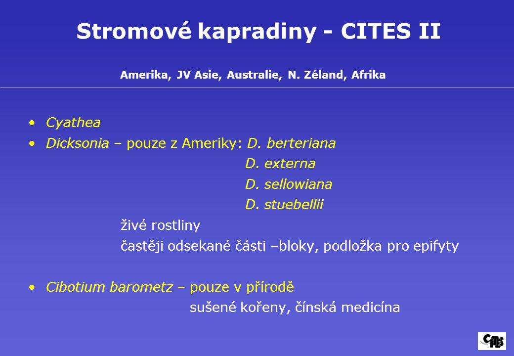Stromové kapradiny - CITES II Cyathea Dicksonia – pouze z Ameriky: D.