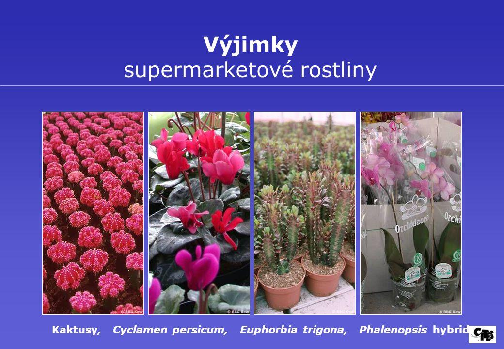 Výjimky supermarketové rostliny Kaktusy, Cyclamen persicum, Euphorbia trigona, Phalenopsis hybrid