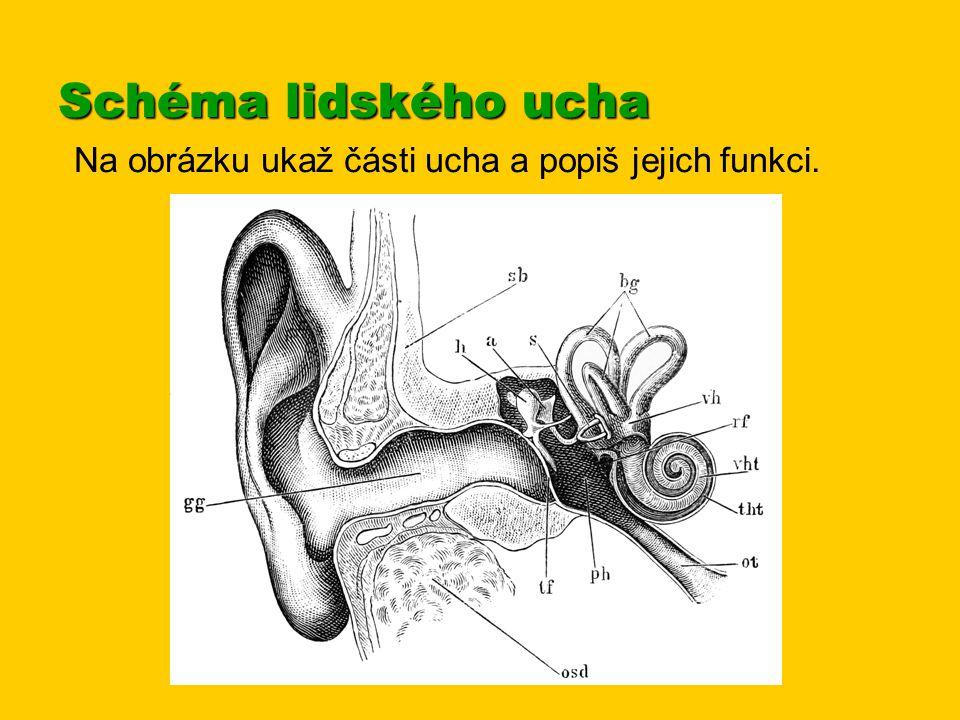 Lidské ucho vnímá zvuky frekvencí od 16 Hz do 16 kHz (nejcitlivější je na tóny o kmitočtech 2000 – 4000 Hz).