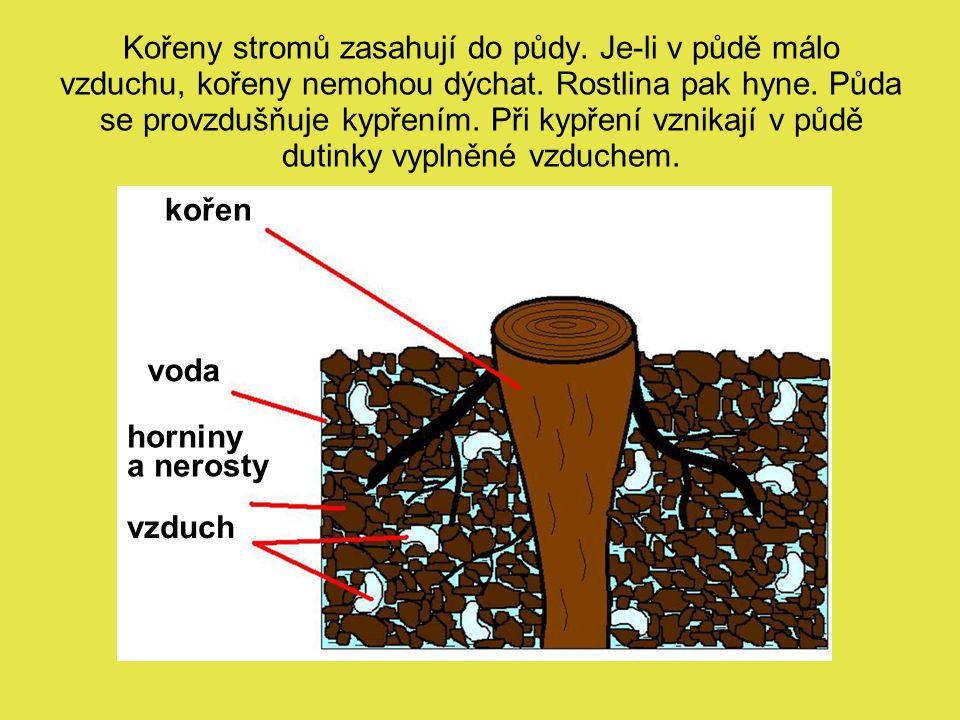 Kořeny stromů zasahují do půdy. Je-li v půdě málo vzduchu, kořeny nemohou dýchat. Rostlina pak hyne. Půda se provzdušňuje kypřením. Při kypření vznika