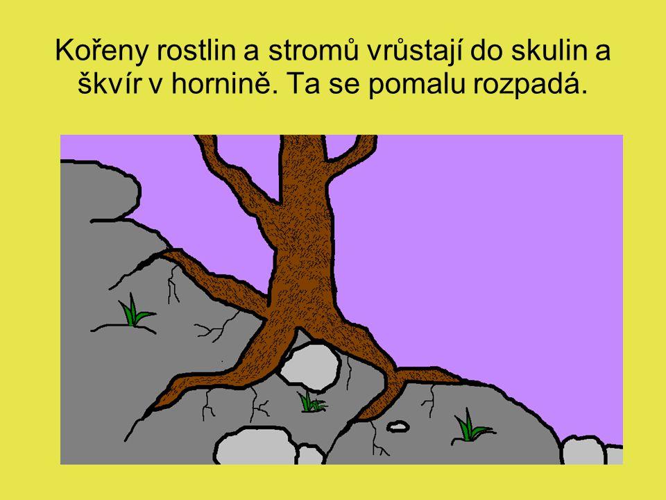 Kořeny rostlin a stromů vrůstají do skulin a škvír v hornině. Ta se pomalu rozpadá.