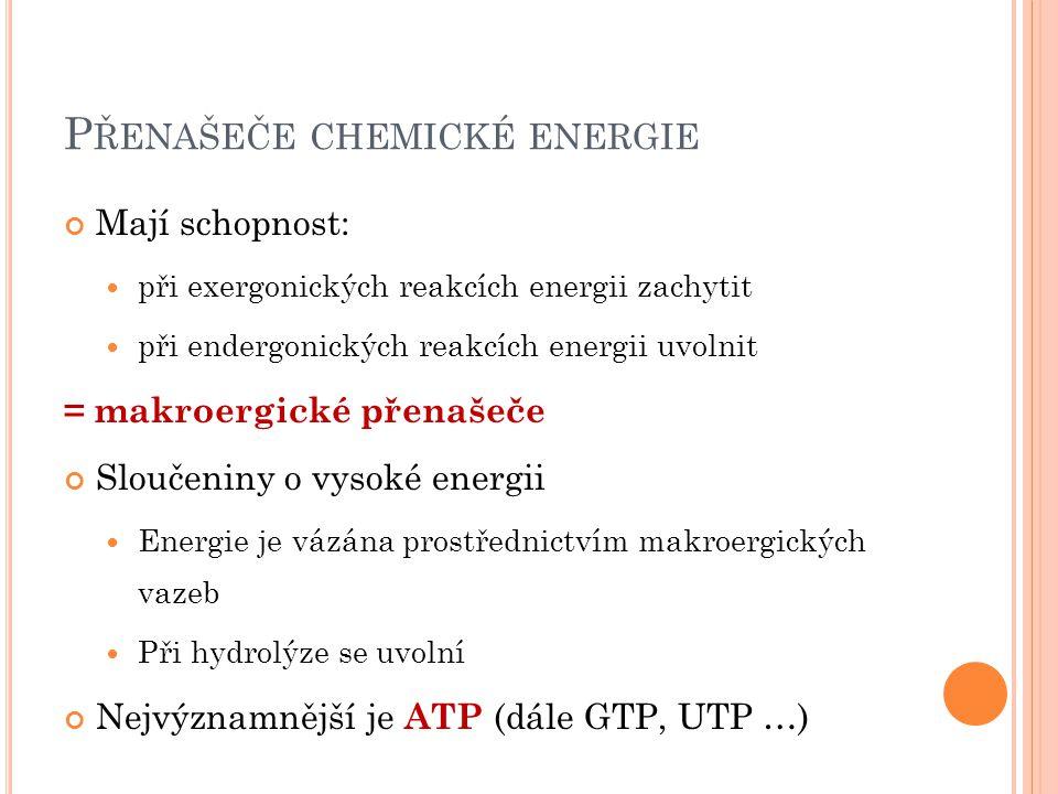 P ŘENAŠEČE CHEMICKÉ ENERGIE Mají schopnost: při exergonických reakcích energii zachytit při endergonických reakcích energii uvolnit = makroergické přenašeče Sloučeniny o vysoké energii Energie je vázána prostřednictvím makroergických vazeb Při hydrolýze se uvolní Nejvýznamnější je ATP (dále GTP, UTP …)