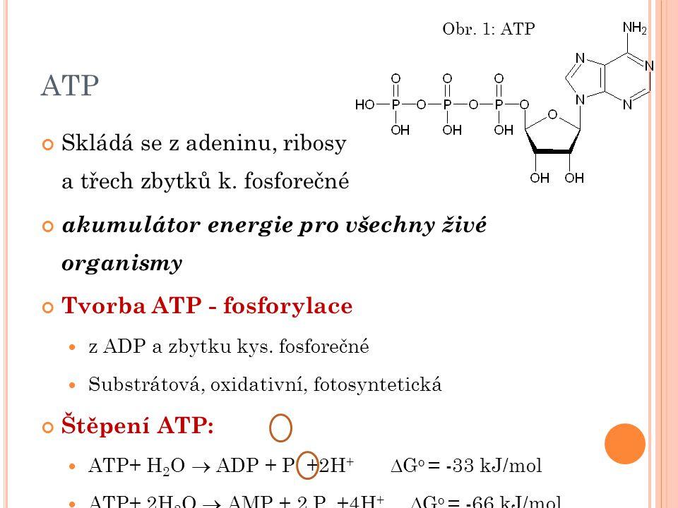 ATP Skládá se z adeninu, ribosy a třech zbytků k. fosforečné akumulátor energie pro všechny živé organismy Tvorba ATP - fosforylace z ADP a zbytku kys