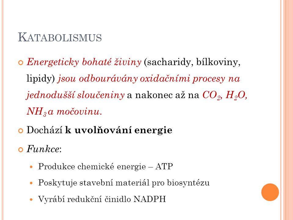 K ATABOLISMUS Energeticky bohaté živiny (sacharidy, bílkoviny, lipidy) jsou odbourávány oxidačními procesy na jednodušší sloučeniny a nakonec až na CO 2, H 2 O, NH 3 a močovinu.