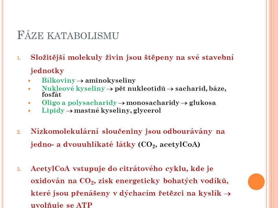 F ÁZE KATABOLISMU 1.