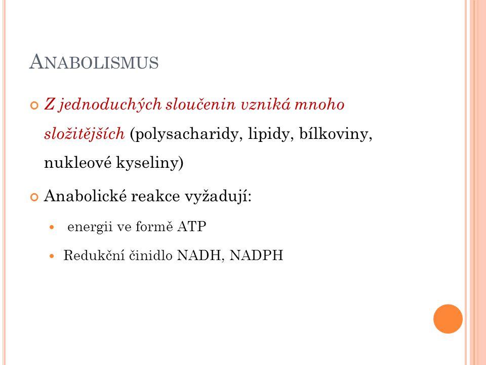 A NABOLISMUS Z jednoduchých sloučenin vzniká mnoho složitějších (polysacharidy, lipidy, bílkoviny, nukleové kyseliny) Anabolické reakce vyžadují: energii ve formě ATP Redukční činidlo NADH, NADPH