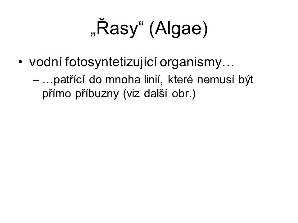 """""""Řasy (Algae) vodní fotosyntetizující organismy… –…patřící do mnoha linií, které nemusí být přímo příbuzny (viz další obr.)"""