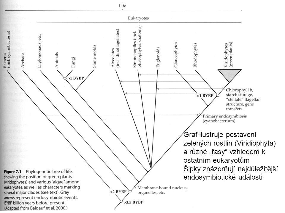 """Graf ilustruje postavení zelených rostlin (Viridiophyta) a různé """"řasy vzhledem k ostatním eukaryotům Šipky znázorňují nejdůležitější endosymbiotické události"""